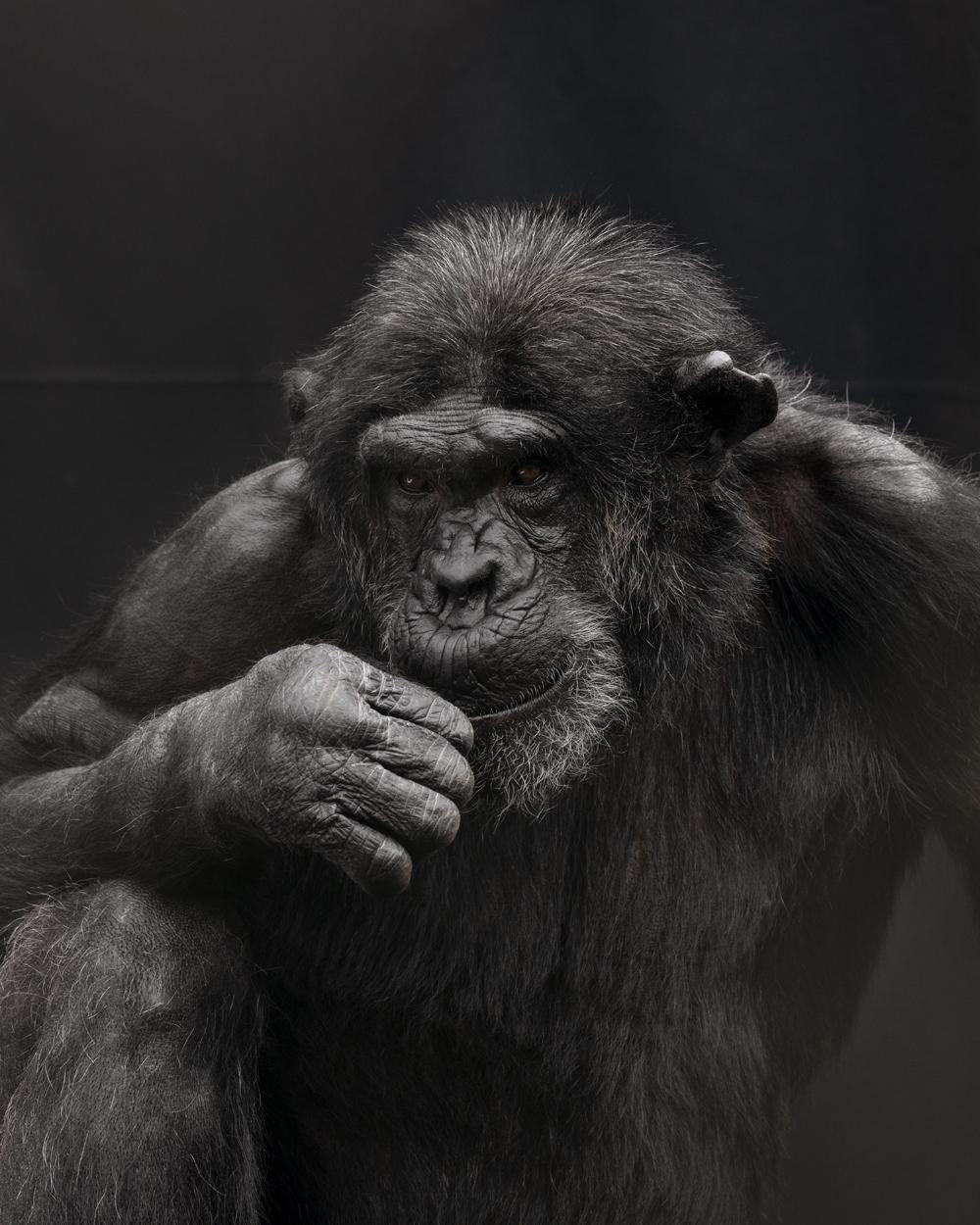 Primates | SPA2020 Nederlands Fotomuseum