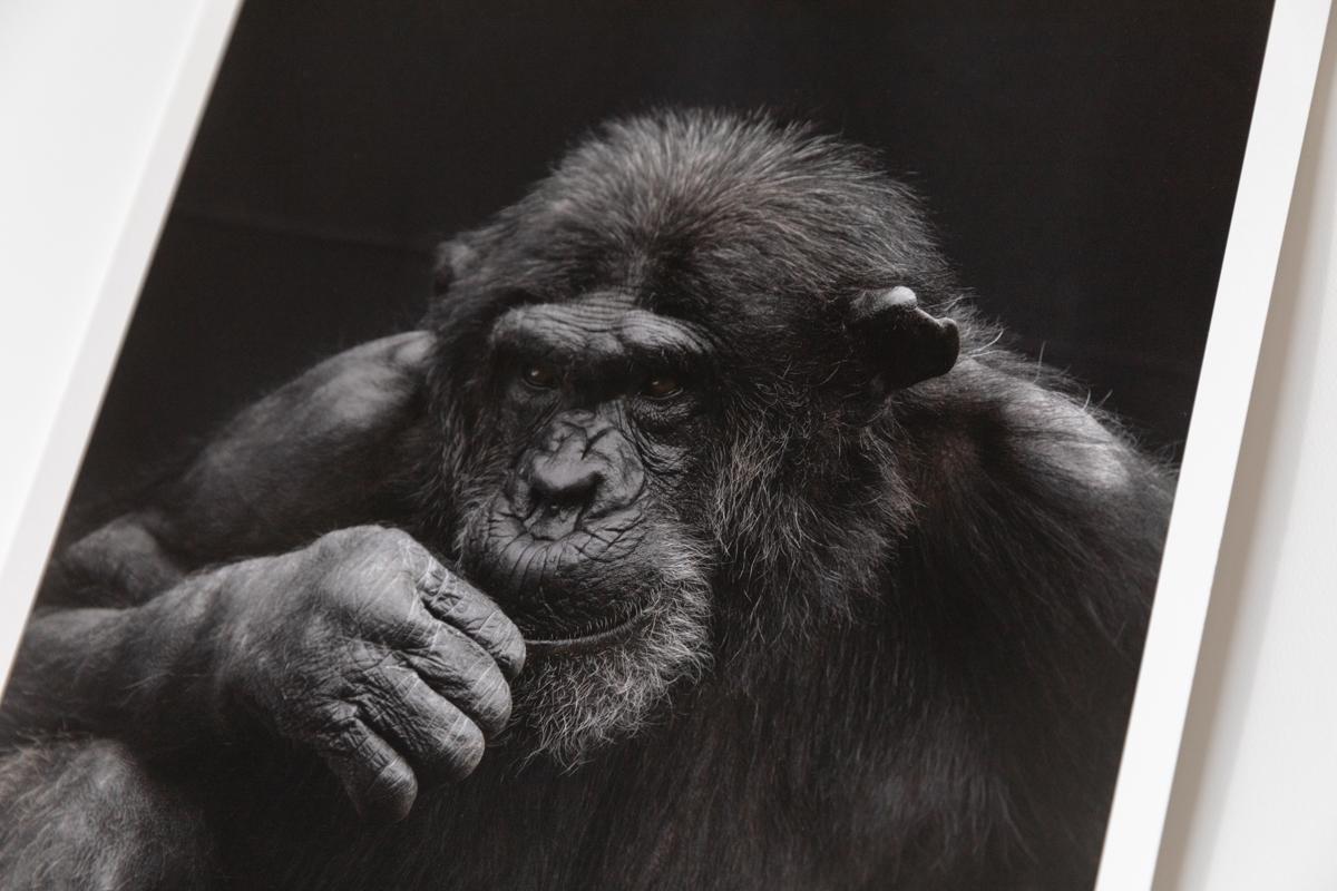 Prints for Primates